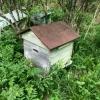 Продам пчёл!